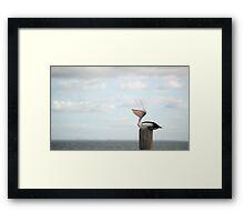 ha ha ha - laughing pelican Framed Print