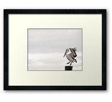 Pelican Dance Framed Print