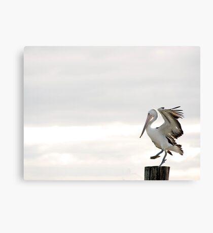 Pelican Dance Canvas Print