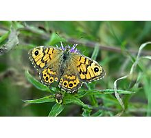 Wall Brown Butterfly Photographic Print