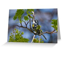 Yellow Rumped Warbler Greeting Card