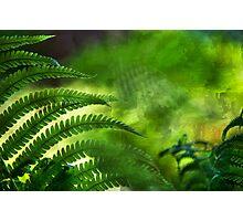 Fern Leaf. Healing Art Photographic Print