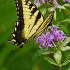 Bee Balm and the Swallowtail by PineSinger
