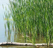 Floating Log in a Marsh by rhamm
