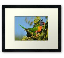 Colours! Framed Print