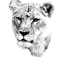 Lioness. Female Lion. Digital Wildlife Engraving Image by digitaleclectic