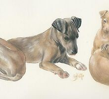 Italian Greyhound Puppies by BarbBarcikKeith