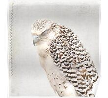 Tundra Falcon Poster