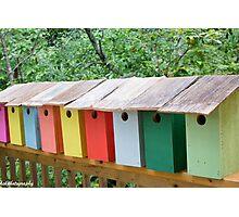 Blue bird boxes Photographic Print