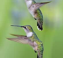 Hummingbird Flight by Bonnie T.  Barry