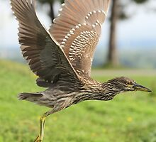 Learning to fly by Heather King