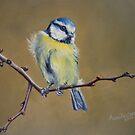 Blue Tit by Anne Zoutsos