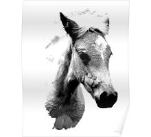 Horse Face and Head. Digital Farm Animal Engraving Image Poster