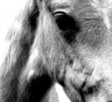 Horse Face and Head. Digital Farm Animal Engraving Image Sticker