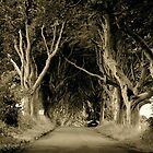 The Dark Hedges of Stranocum, Ballymoney, County Antrim by Laura Butler