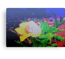 Our tropical nights Canvas Print