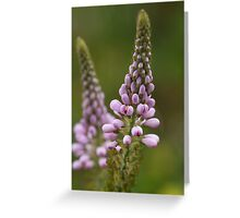 Wild Flower of Western Australia Greeting Card