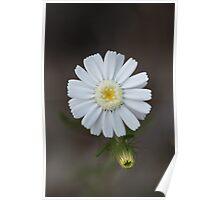 Wild Flower of Western Australia Poster