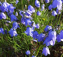 Bluebells by Elisabeth and Barry King™ by BE2gether