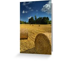 Nature Does Nothing In Vain Greeting Card