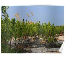 Sand Dune Weeds Poster