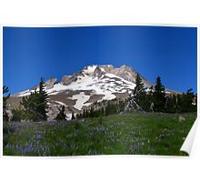 Wildflowers on Mt. Hood Poster