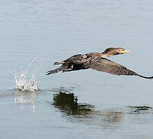 Hop...skip...jump... by Heather King