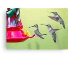 Lunch Line Canvas Print