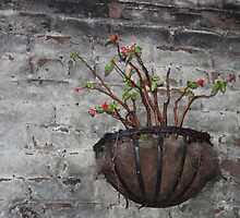 Flowers on a Wall by virginian