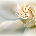 White Gardenia by paintingsheep