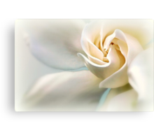 White Gardenia Canvas Print