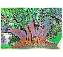 picton tree Poster
