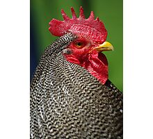 Rooster! Photographic Print