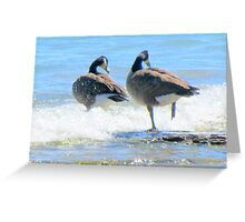 geese 1 Greeting Card