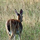"""Oh """"deer"""" - where's my mommy ? by Bine"""