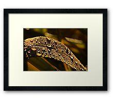 Warm September Light Framed Print