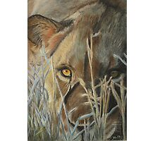 Lioness in the Grass Photographic Print