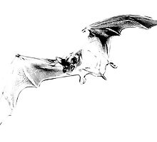 Vampire Bat Halloween Digital Engraving Image. by digitaleclectic