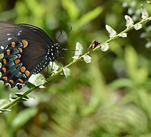 butterfly by dottie9925