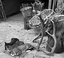 Sleeping cats by JavierMontero