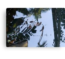 Where Giant Water Striders Live Canvas Print