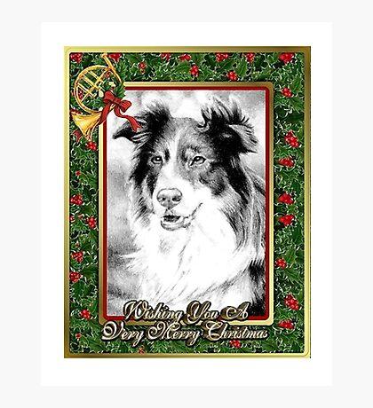 Australian Shepherd Christmas Photographic Print