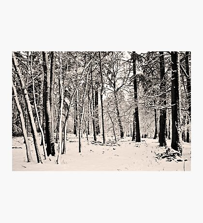 Snow Scene #1 Photographic Print
