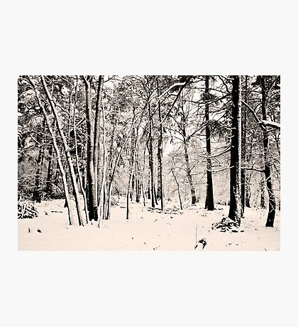 Snow Scene #2 Photographic Print