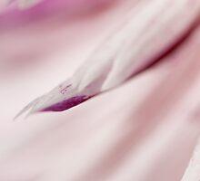 mauve illusion by ma-fleur-art