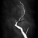 Dead Reach by PerkyBeans