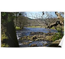 River through the Trees Poster