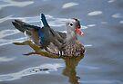 Little Duck by Carol Bleasdale