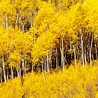 Golden Fall Aspens by Greg Summers