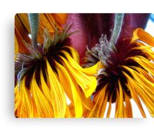 face down but still beautiful Canvas Print